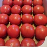 今日はトマトでミートソース作りました