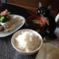 三崎の鯵の塩焼きと天栄米の新米