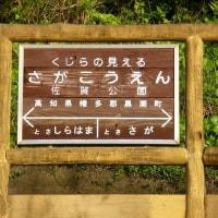 TK31佐賀公園(高知県) さがこうえん