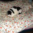 安眠妨害をする猫達