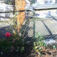 庭いじり あれこれ植えたし きりはなし
