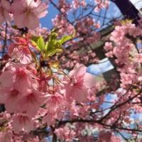 春ですねぇ(╹◡╹)