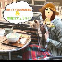 神楽坂ランチ〜