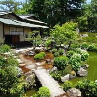 両足院の半夏生は清らかに池のある庭園に咲いている!