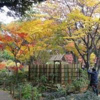 横浜公園の紅葉と中華街のエスニック