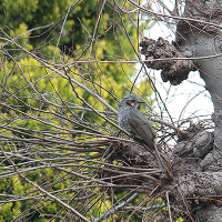 葛原の野鳥