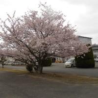 4月10、12、14日(月・水・金) 春の外出ツアー