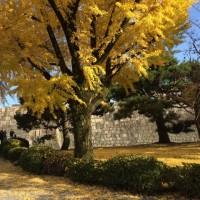 京都で充実した1日!
