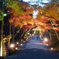 日吉大社の紅葉が見頃です
