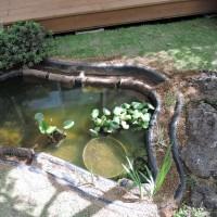 池のその後(新蜻蛉池)