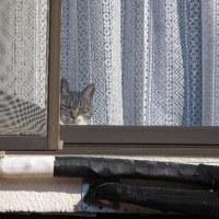 窓ぎわの「ちびリン」