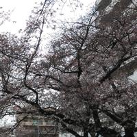 宮崎台さくら祭り