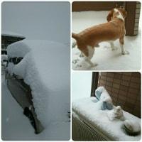 大雪だっ!