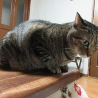 猫と漱石の日