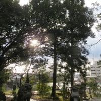本屋親父のつぶやき 12月 5日 今朝も春日神社境内で「日拝」