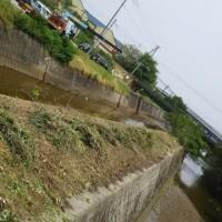 川の堤防が きれいになります。