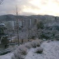 今日は雪景色!子供は~~~