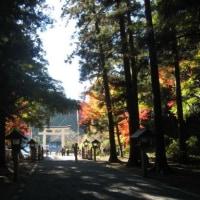 デジブック アーカイブズ⑳『古代の森の紅葉』
