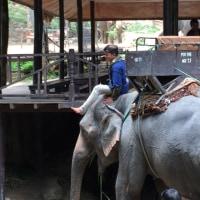 チェンマイでの衝撃!   象のが私より絵が上手いこと💜