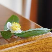 下向きに咲く茶の花