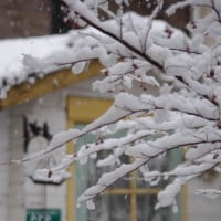 春の雪。。。
