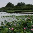 埼玉県川越市伊佐沼にある伊佐沼で、カワセミを久しぶりに観察しました