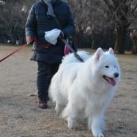 小金井公園でお散歩^^