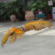 《いろんな鳥さんたち&3回目のバードショー》掛川花鳥園に行って来た~7