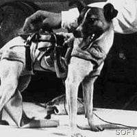 ソ連の有人宇宙船の試験機「スプートニク5号」を打ち上げた。