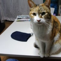 布団にもぐりこむ猫