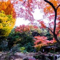六儀園の紅葉