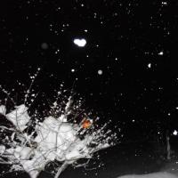 降りやまぬ雪・・・明日はどうなるのか?