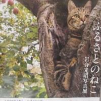 ♪♪ ネコの写真展...