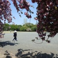 散歩道4月h