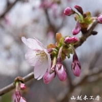 鬼怒川温泉に春が来た。2017