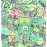 蓮の葉に水滴ころころ、いずみちゃんカレンダー