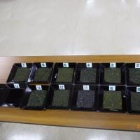 364煎 1/8コラボマーケット 日本茶鑑定講座を実施