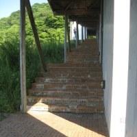 第46回野草(イエツァオ)野外教室NO31