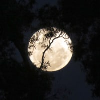 Supermoon in Perth 〜by空倶楽部〜