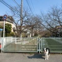 お花見2017~地元編 3/29