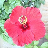 お花…(*^^*)