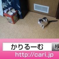 2016/08/28(13:25:36)写真 猫H