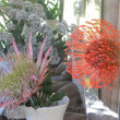 南アの国花