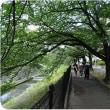 <ブリリア散歩の会>blog(40)2017.7.11