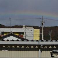 干し柿パート2と虹