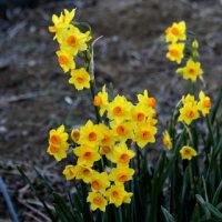 寒中に春を撮る