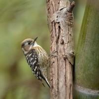 鳥撮りと他家池のPH測定
