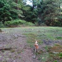 レットさんと林道歩きのつもりが。