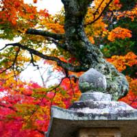 石灯籠と真っ赤な紅葉