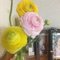 めずらしく花を飾ったり